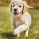 Unconditional Love Puppy